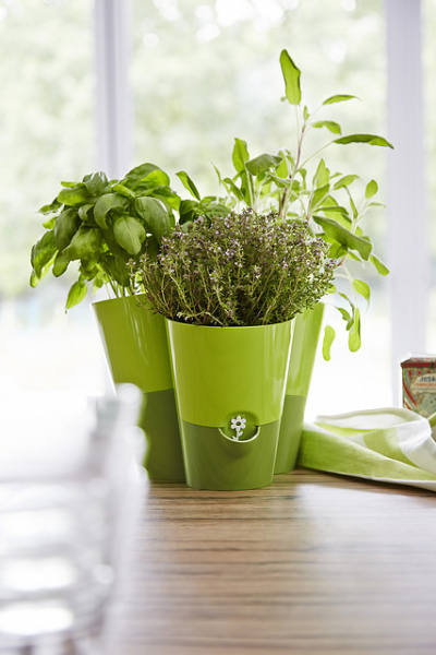 emsa-fresh-herb
