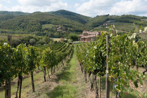 Historie italského vína