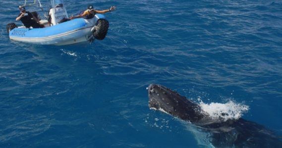 Zaříkávačka velryb