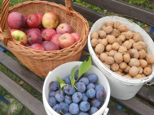 jablka, švestky, ořechy