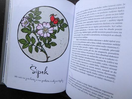 Rok ve Svatojánu Šípek - ukázka z knihy