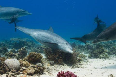 Delfíni v Rudém moři, Egypt. Foto: Prima Zoom