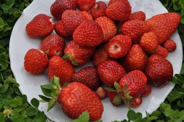 červené jahody na talíři