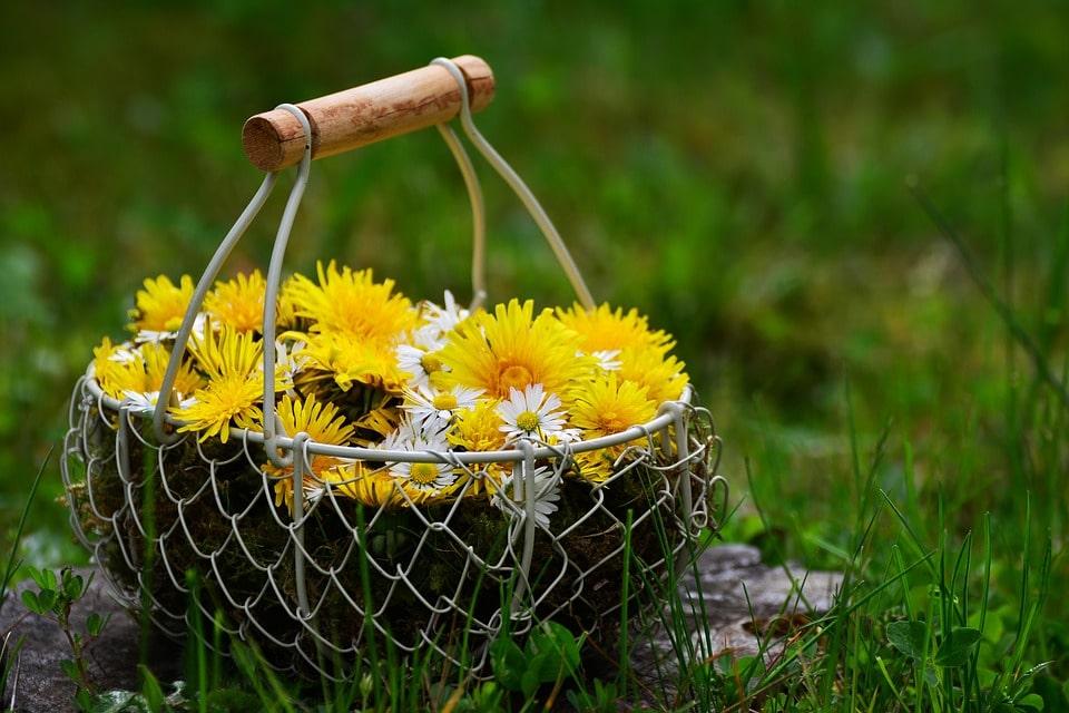 Jarní sirupy (nejen) prozdraví
