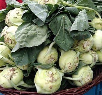 Kedlubna – výjimečná zelenina, která se tváří nenápadně