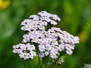 Léčivé rostliny