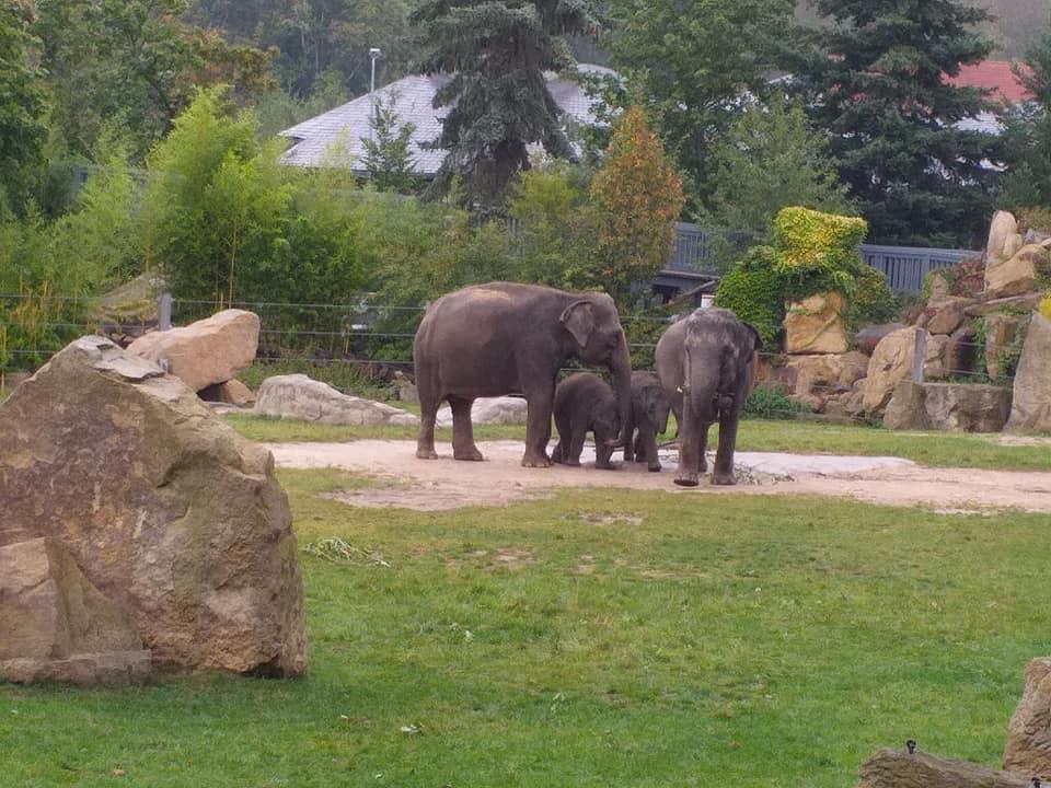 Sváteční promoklá zoo
